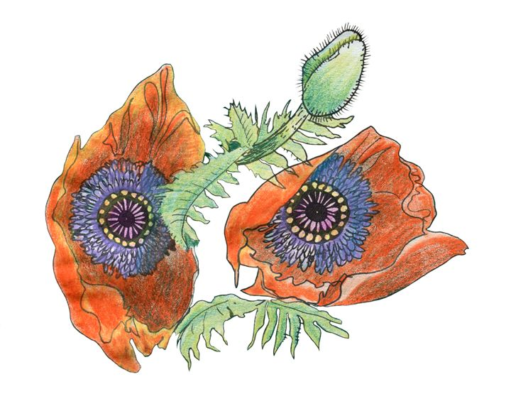 Two poppies, seen from above, origin - Christina Rahm Art
