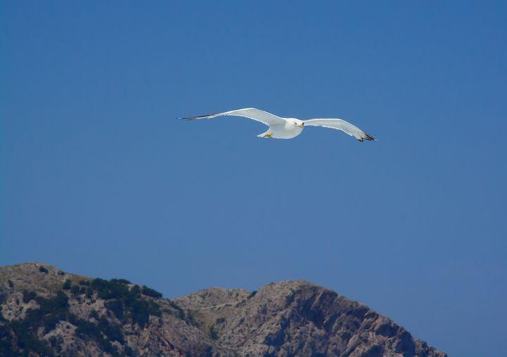 Seagull - Christina Rahm Art