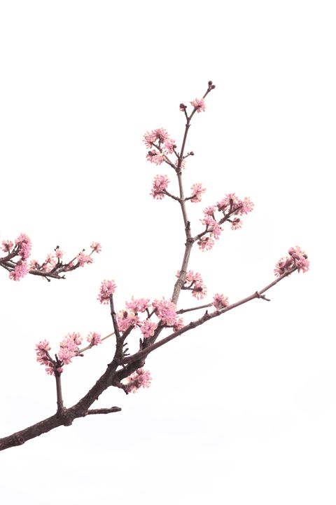 Spring tree - Christina Rahm Art