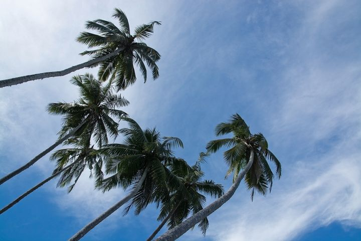 Coconut palm trees and sky in remote - Christina Rahm Art