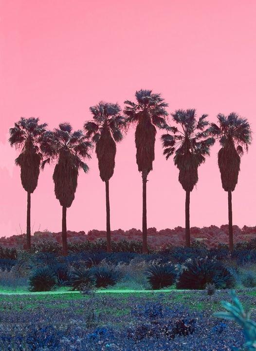 Palm trees in pink - Christina Rahm Art