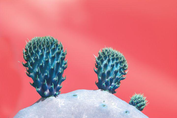 Blue cactus fruits - Christina Rahm Art