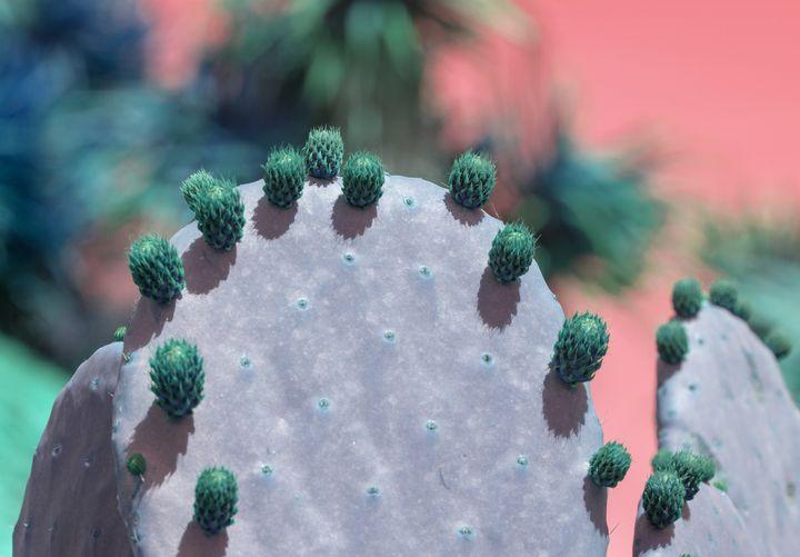Green cactus fruits - Christina Rahm Art