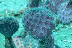 Abstract purple and turquoise cactus