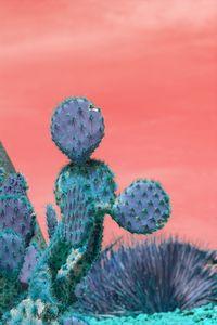 Blue cactus leaves