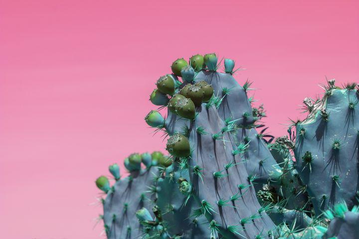 Green cactus fruits on pink - Christina Rahm Art