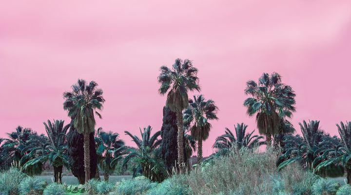 Palms in pink - Christina Rahm Art
