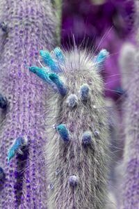 Purple cactus turquoise flowers