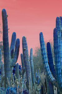 Blue cactus red sky