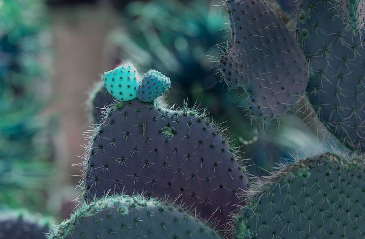 Glowing cactus fruits - Christina Rahm Art