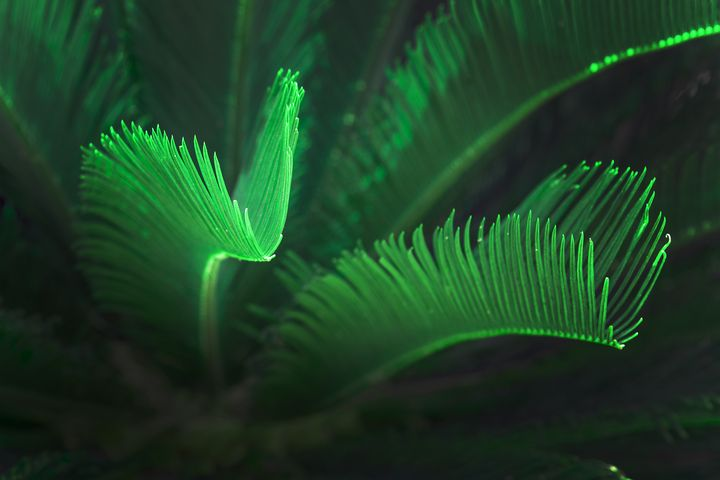 Green glowing palm leaves - Christina Rahm Art