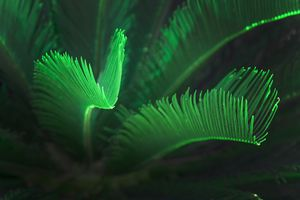 Green glowing palm leaves