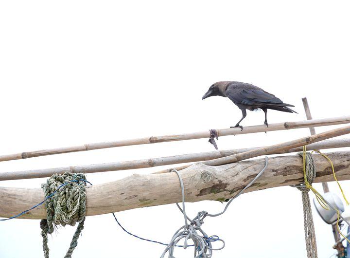 Black Raven - Christina Rahm Art