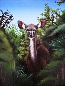 South African Kudu Buck