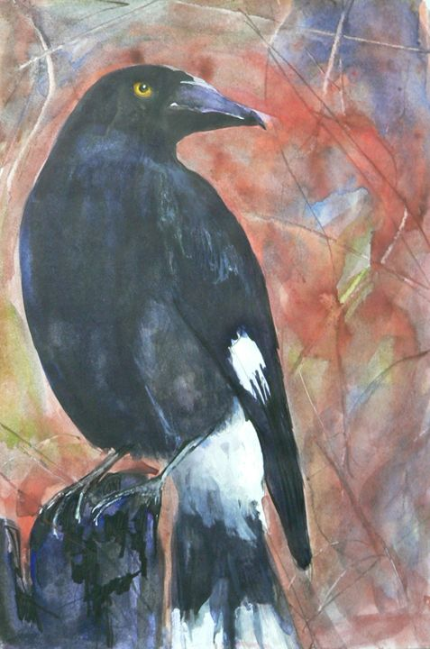 The Pied Currawong - White Dog Studio - AJ Northover