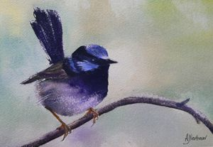The Superb Blue Wren