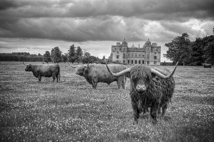 Highland Cattle 12 - Justin Short