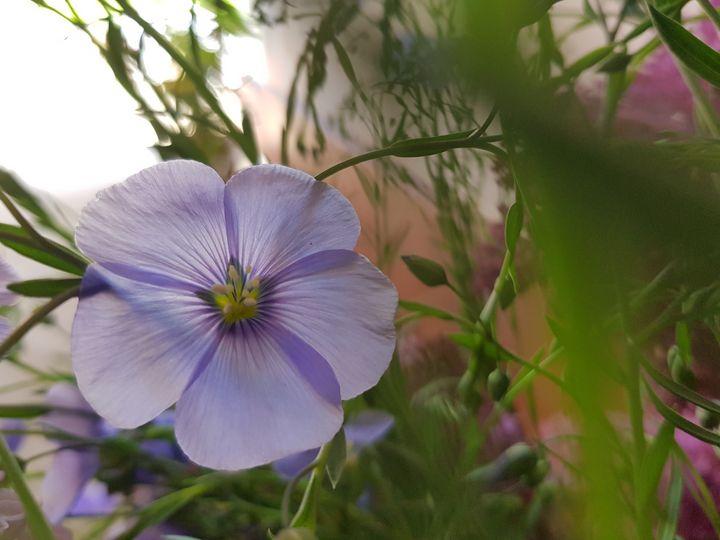 Soft purple - Miruna