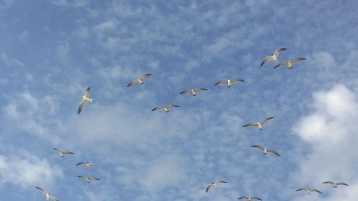 swarming birds - Rock Csilla