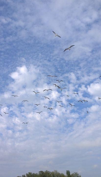 Lots o' birds - Rock Csilla