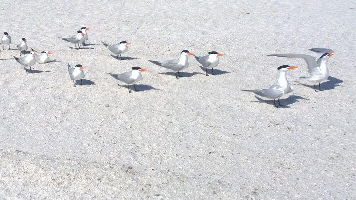 Those beach birds - Rock Csilla
