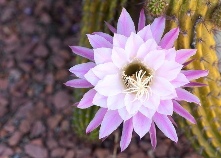 Desert Bloom - Theme Less Images