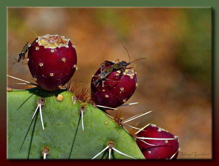 Prickly Pears - Sheryl Gerhard