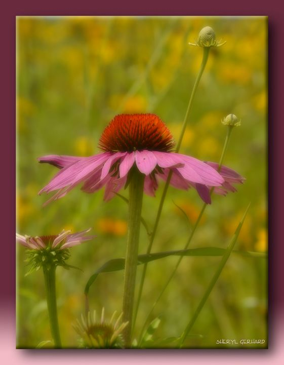 Summer Pastels - Sheryl Gerhard