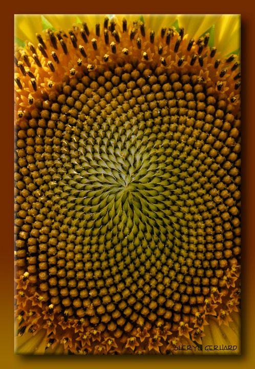 Center of a Sunflower - Sheryl Gerhard