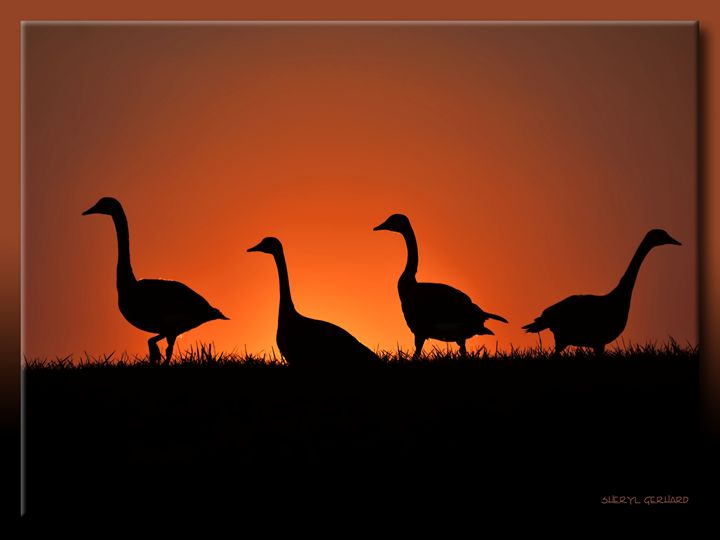 Geese at Dusk - Sheryl Gerhard