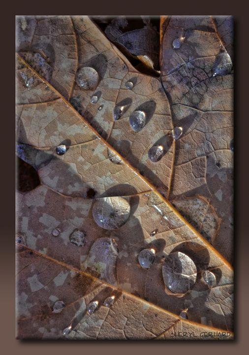 Dew Drops - Sheryl Gerhard