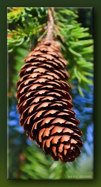 Pine Cone - Sheryl Gerhard