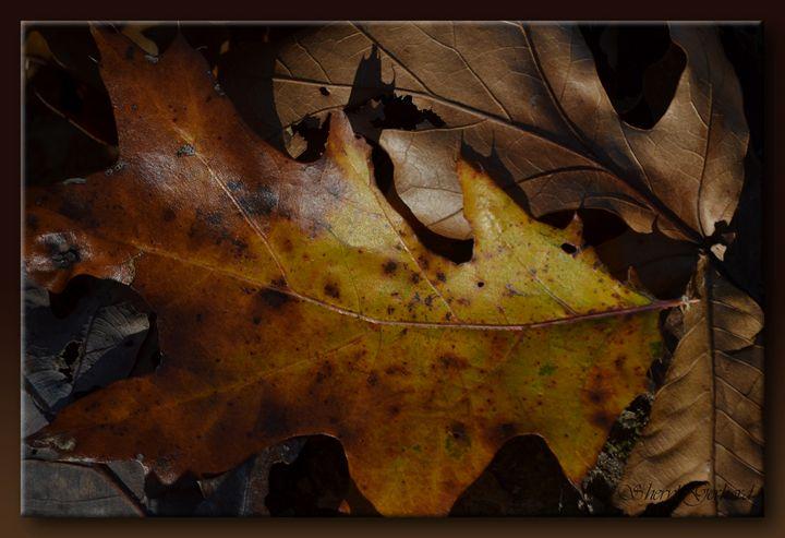 Autumn Leaf - Sheryl Gerhard