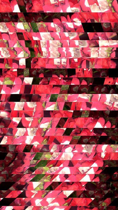 pink flowers - Benji Friedman