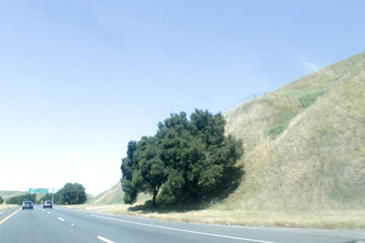 freeway tree - Benji Friedman