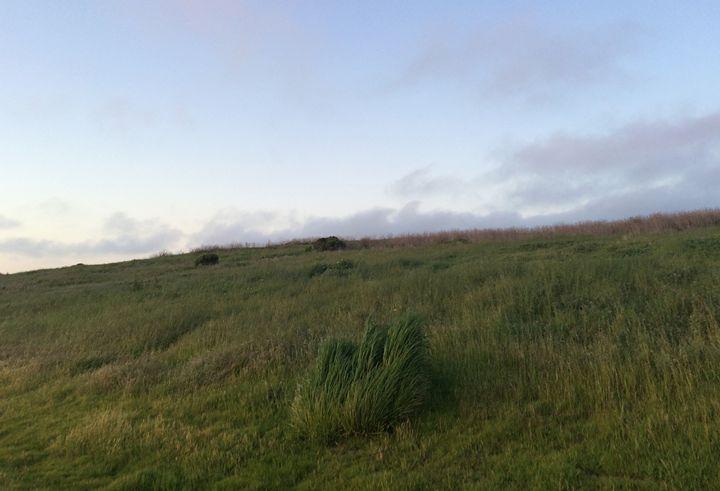 grass hill - Benji Friedman
