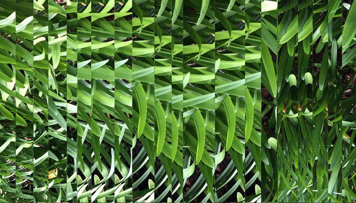 agapanthus slices - Benji Friedman