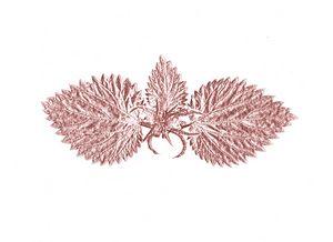 May be wings - 2
