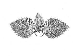 May be wings - 1