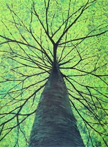 Canopy - SBear