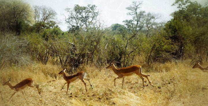 African Wild Life - Michael Guo's