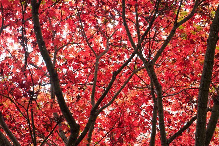 Autumn Glory - Padmayogini