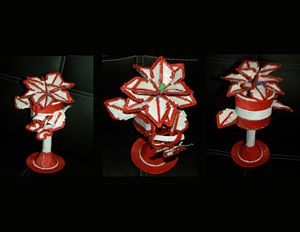 Cup Poinsettia