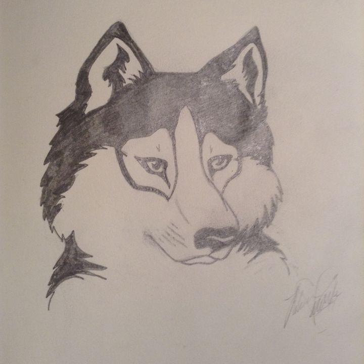 Siberian husky - Peri Amour  (Rebecca Marie)