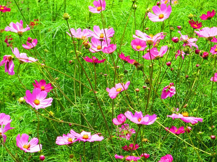 Pink Flowers - Indiartica