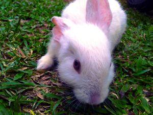 rabbits on sight