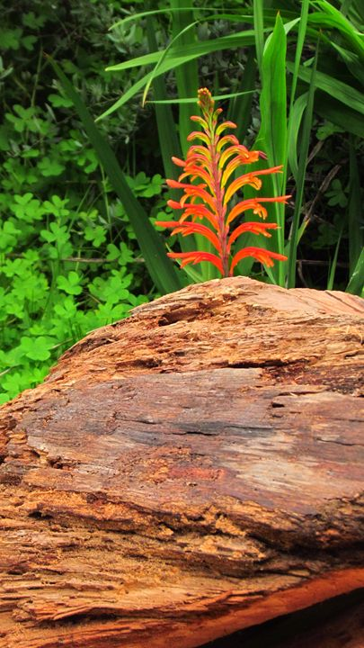 From the Bark of a Tree - SLM Designs