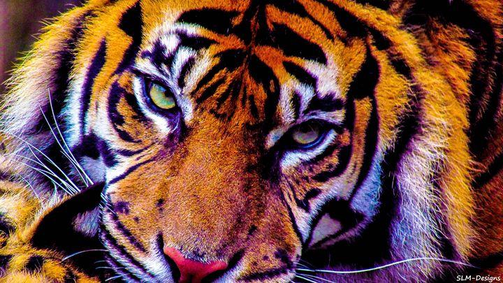 Tiger Eyes - SLM Designs