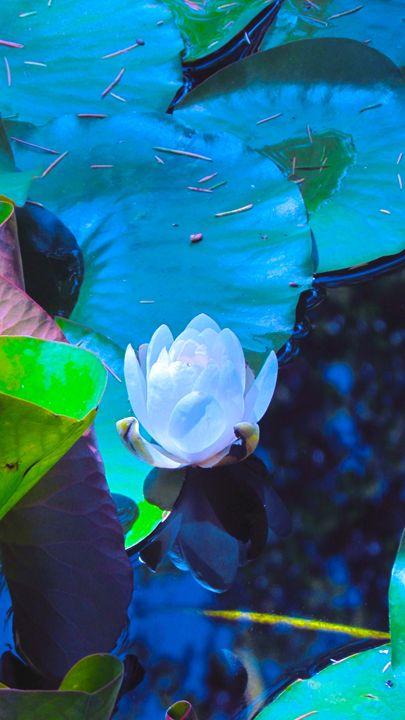 Lonely Lotus Flower - SLM Designs