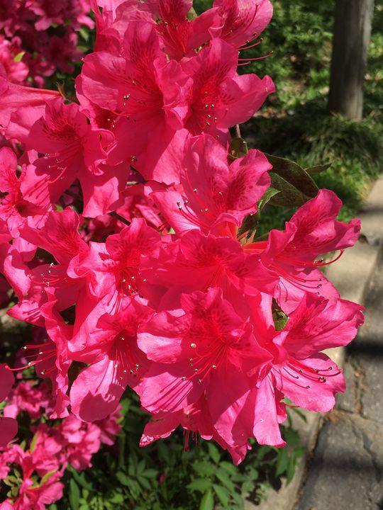 New Blooms - Ashley F Thacker